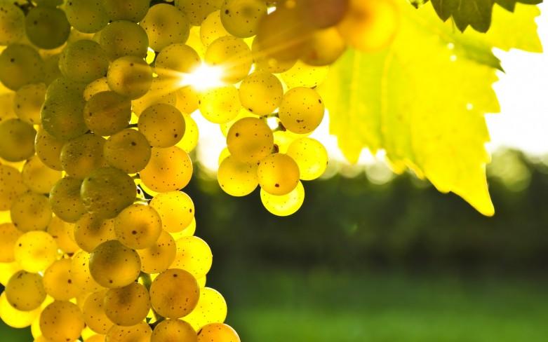 Как сделать изюм из винограда в домашних условиях